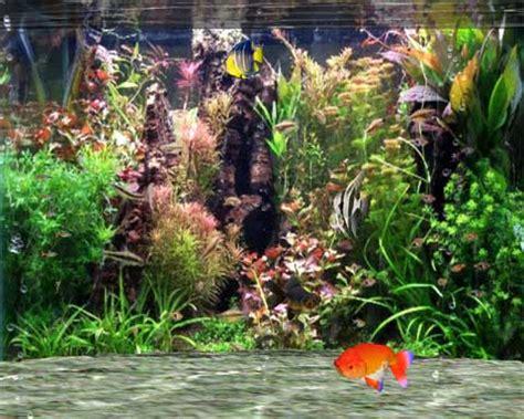 4d Piglet Samsung Galaxy V Real Pict fantastic 3d fish aquarium st 225 hnout cz chip eu