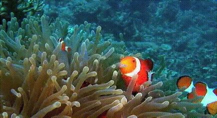 imagenes animadas gif para power point gifs animados de pez payaso gifmania