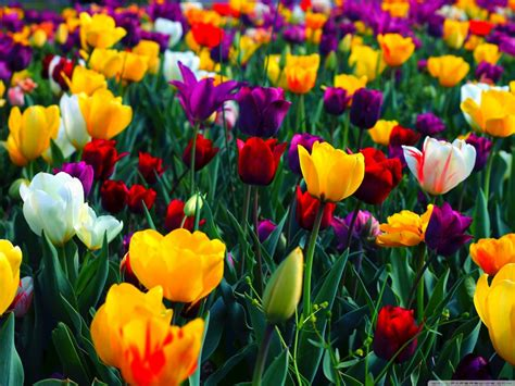 30 Spring Backgrounds Wallpapers Images Pictures Pictures Of Colorful Flowers