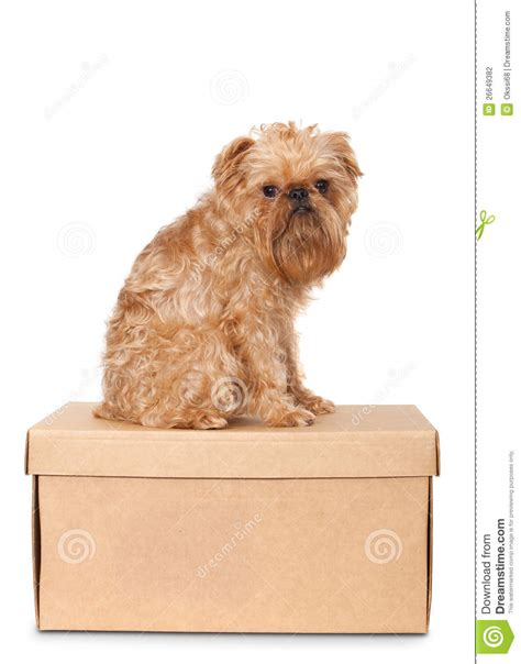 puppy on on cardboard box stock photography image 26649382