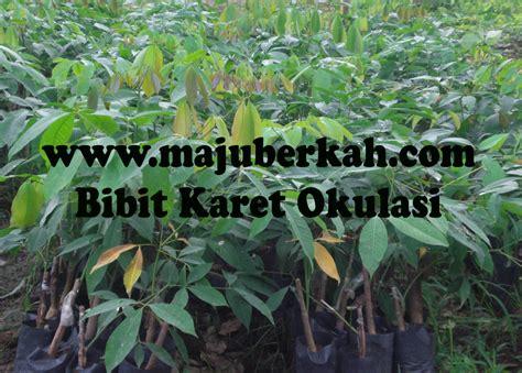Jual Bibit Buah Tin Area Malang jual tanaman langka tanamanbaru
