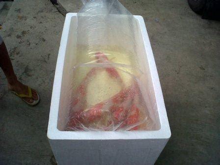 Harga Bibit Ikan Koi Jepang indukan dan bibit ikan koi murah budidaya koi