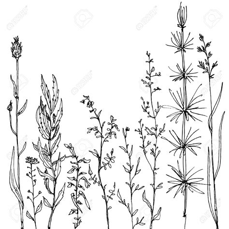 drawing doodle flowers flower floral composition with ink drawing herbs and