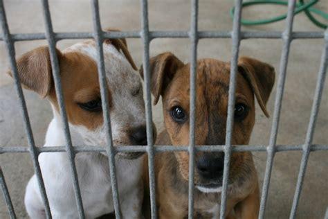 cani in gabbia traffico cani est europa cuccioli neonati maltrattati