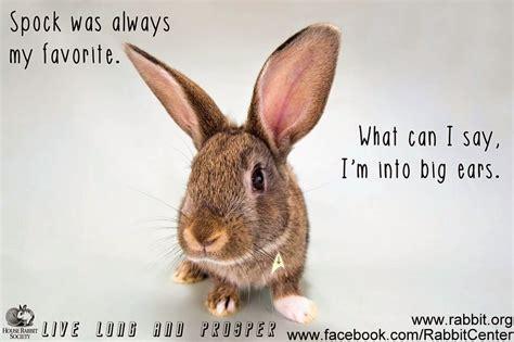 Easter Bunny Meme - rabbit ramblings funny bunny memes