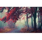 Nature Landscape Path Mist Sunrise Trees Fall