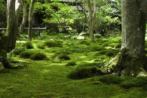 Zen Garden Art - arashiyama forest gioji daikakuji ryoanji and kinkakuji temples journey of discovery