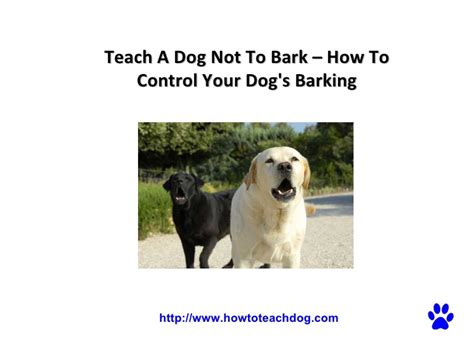 how to your not to bark teach a not to bark how to your s barking