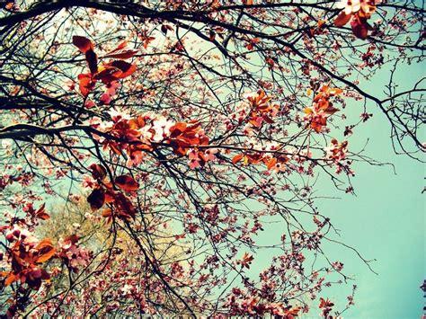 girly autumn wallpaper صور خلفيات ايفون منقوشة خلفيات روعه للايفون جديدة 2017