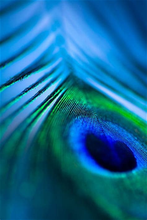 beautiful blue color art beautiful blue color colors feather image