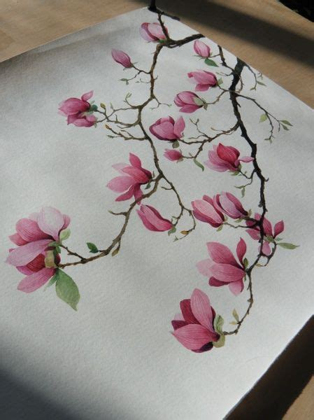watercolor tattoos ontario 永生之酒 的涂鸦王国作品 玉兰 saucer magnolia like the one i in