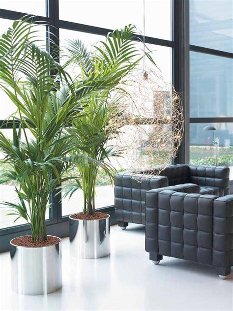 plantas interior la vida es pasi 243 n cuidados para las plantas de interior