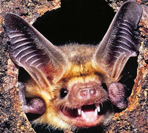 are bats birds or mammals f f info 2017