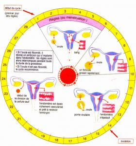 Calendrier Ovulation Et Nidation Les Signes D Ovulation