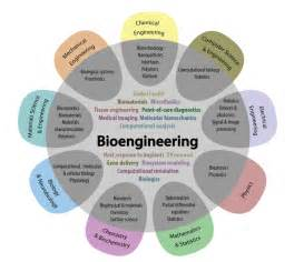Jobs With A Biology Degree by Is Bioengineering Right For Me Uw Bioengineering