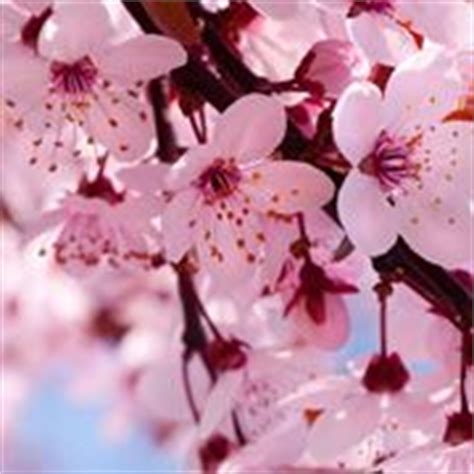 elenco fiori e piante dalla a alla z linguaggio dei fiori