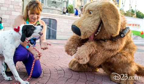 dogs at disney world incident developing at disney world s of animation resort