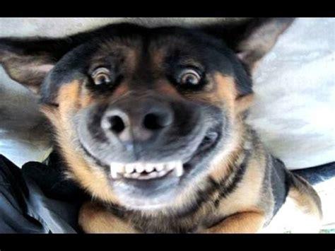 haus ka hauska koirat haukkuvat hauska koira haukkuu videoita