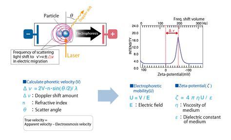 protein zeta potential zeta potential particle size analyzer elsz 2000 series
