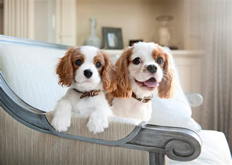 13 apartment friendly breeds