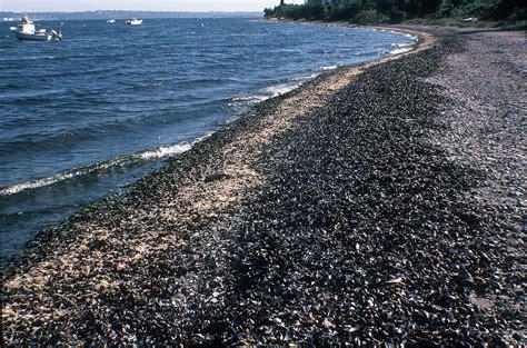 Calendar Island Mussels Dead Zones Mussels On Newsdesk