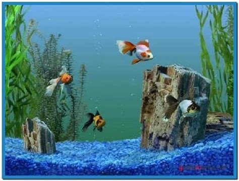 Goldfish aquarium 3d screensaver 1.02   Download free