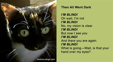 We Are The Cat Excerpt by Thank You Poem From The Cat Just B Cause