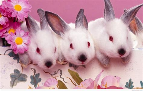 easter bunny happy easter bunny wallpapers and quotes