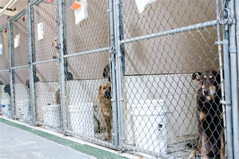 local pound volunteer with your local animal shelter