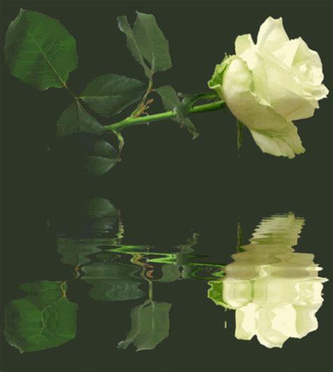 imagenes animadas flores imagenes gif animadas de flores 27 im 225 genes bellas
