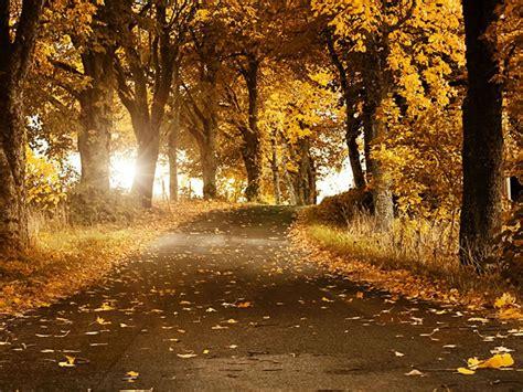 beautiful autumn daydreaming wallpaper 32346492 fanpop