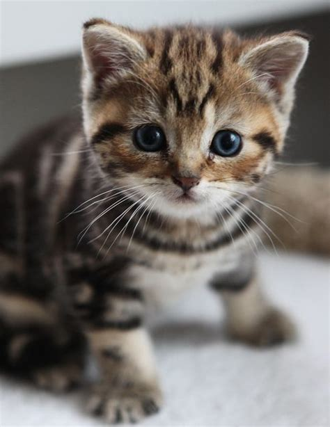 25 best ideas about baby cats on pinterest cute baby kittens adorable kittens and kittens