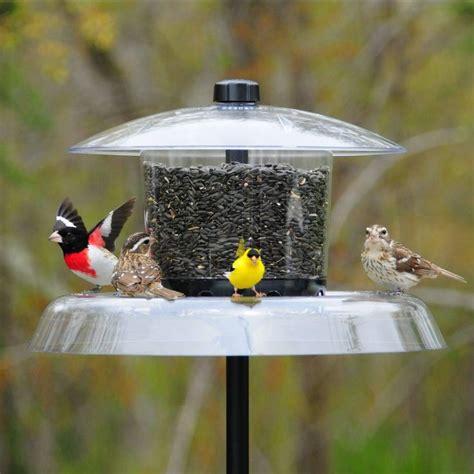 the 25 best squirrel proof bird feeders ideas on