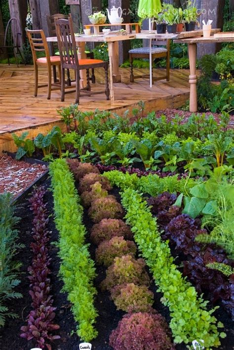 Happy May Long Weekend Veggie Garden Ideas