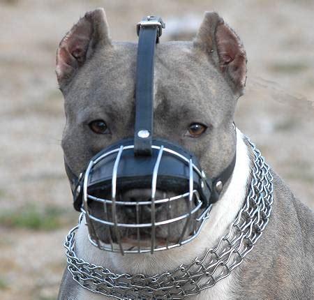 muzzle for pitbull american pit bull terrier wire basket muzzles size chart american pit bull