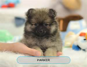 Small Dogs Free To Home Barnsley 17 Best Ideas About Small Puppies For Sale On