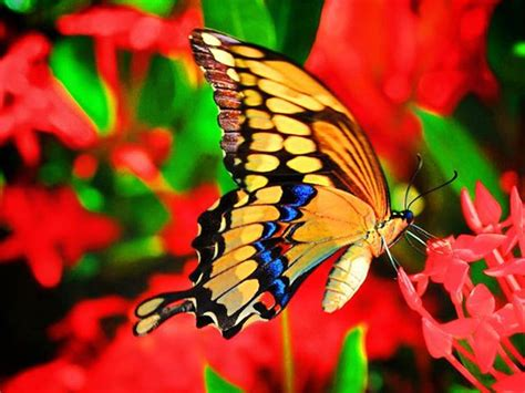 Color Meanings Symbolism Spiritual Meaning Of Colors Butterfly Meanings