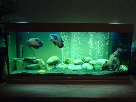 decor design aquarium fish tank aquarium decoration for oscar fish aquarium design ideas