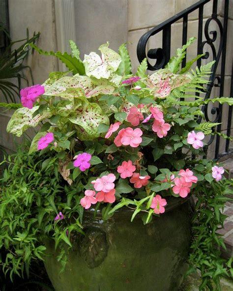 caladium and impatient container gardening pinterest beautiful container gardening and patio