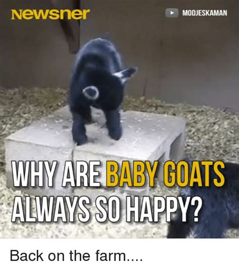 Happy Goat Meme - funny baby goats memes of 2016 on sizzle baby it s cold