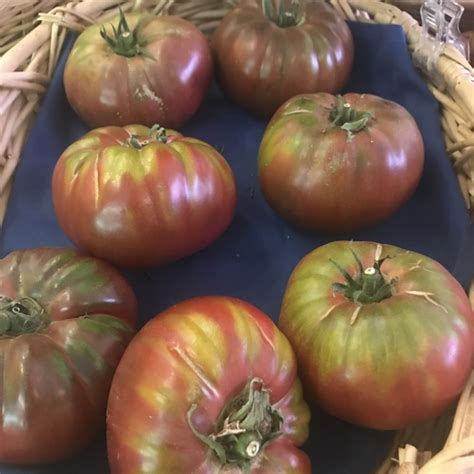 Purple Pearl Tomato purple heirloom tomatoes information recipes and
