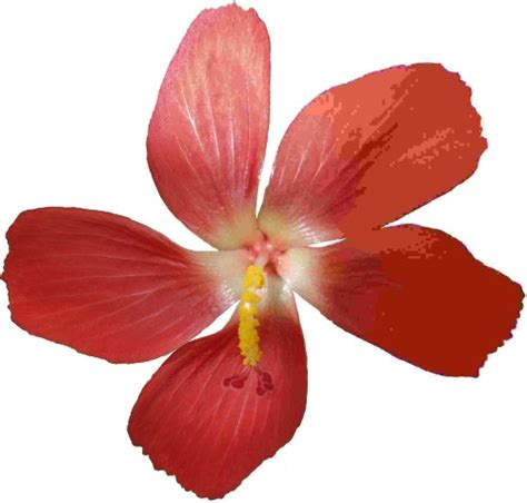 images jpeg file jpeg exle flower jpg wikimedia commons