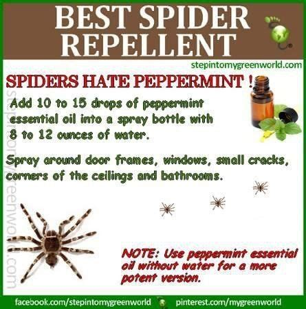 How To Keep Spiders Out Of The House by Is There A Way To Keep Spiders Out Of The House
