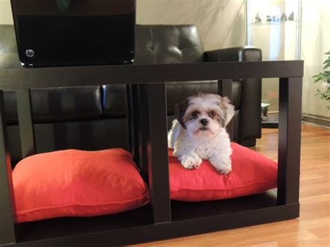 ikea dog 15 super smart diy ikea hacks for dog owners shelterness