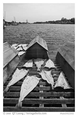 Black and White Picture/Photo: Fish being dried next to