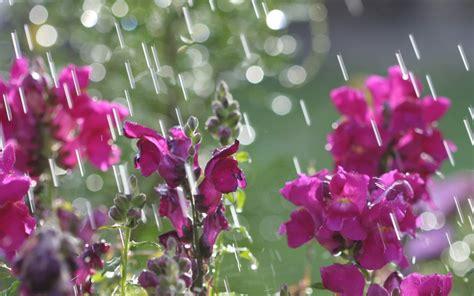 17 best images about april showers on pinterest green april showers april showers 2 1280x800 wallpaper
