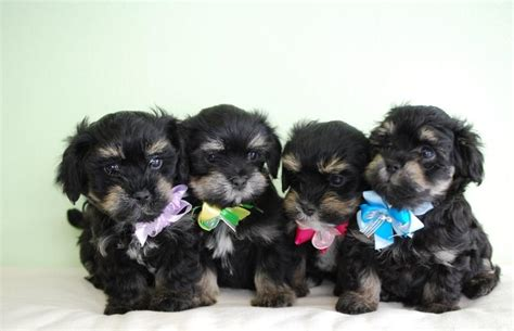 puppies dressed up puppies dressed up images