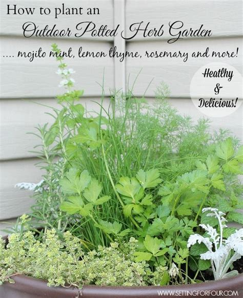 herb garden plants 17 best images about diy creative ideas on