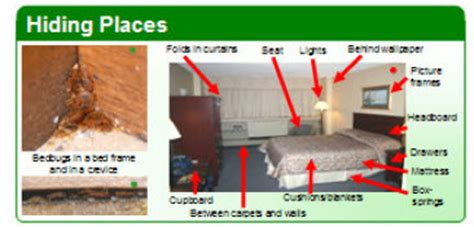 Bed Bug Hiding Places by Information On Bedbugs Pictures Bites And Free Brochures