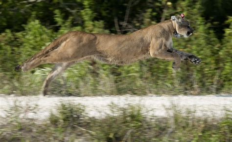 Records For Florida Record Deaths Record Births For Florida Panthers In 2014 Tbo
